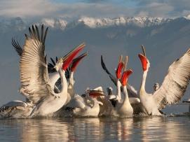 lake-kerkini-macedonia-greece_18563_600x450